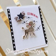 Birthday Delivery Poodle, Congrats Card, Stampin' Up! Dog Cards, Kids Cards, Baby Cards, Friend Birthday, Birthday Bash, Birthday Delivery, Kids Birthday Cards, Stampin Up Catalog, Animal Cards