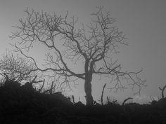Playa El Coco Rivas Nicaragua P1010483 by scott944, via Flickr