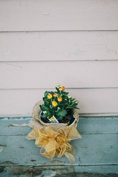 Potted mums wrapped in burlap for centerpieces / favors