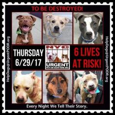 TO BE DESTROYED 06/29/17