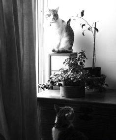 Gatitos en luz y sombra