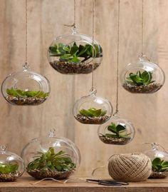 Crea tu propio terrario