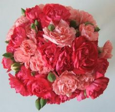 January's Flower: The elegant simplicity of Carnations.