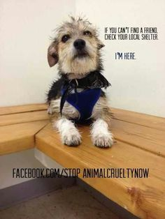 Facebook.com Stop animal cruelty