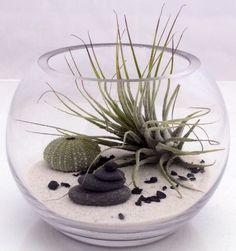 Домашний флорариумКомпозиции из живых растений | ВКонтакте