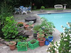 $3.00 Storage crates lined with landscaping fabric (various herbs). $2.00 blue buckets w/drainage holes added for eggplants and tomatoes.  Very good crop this year!