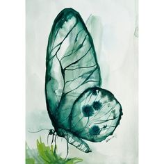 Emerald, Butterfly Original Watercolor Painting, Wall Decor, Home... ❤ liked on Polyvore featuring home, home decor, wall art, butterfly home decor, water color painting, watercolor wall art, butterfly wall art and emerald green home decor