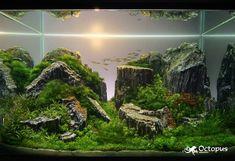 Alluring Aquascape Aquarium Designs : Ideas About Aquariums And Aquascaping On Aquascape Aquarium Designs Reef Aquarium Aquascape Designs Planted Aquarium, Aquarium Terrarium, Nano Aquarium, Mini Terrarium, Nature Aquarium, Aquarium Design, Aquarium Fish, Aquarium Aquascape, Tropical Fish