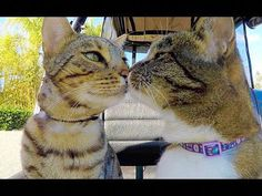 13 best boomer & didga: images cat love cats cute cats