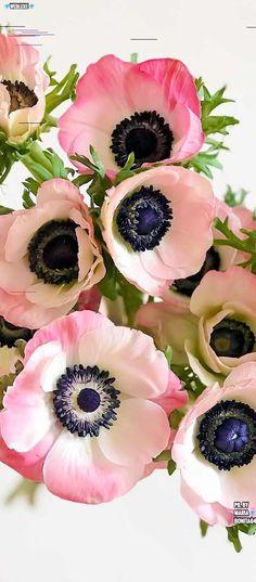 Flowers boquette tattoo tat 26 New Ideas Macro Flower, Anemone Flower, My Flower, Cactus Flower, Fresh Flowers, Pink Flowers, Beautiful Flowers, Exotic Flowers, Pink Peonies