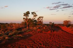 The desert of the Red Centre was the perfect location for doing wide-angle photography. The 'magic hour' intensifies the incredible rich red landscape. Wide Angle Photography, Red Centre, 7 Continents, Green Mountain, National Parks, Scenery, Country Roads, Australia, Earth