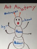 "Dr. Jean's ""ANTics"" / Ant Songs & Activities"