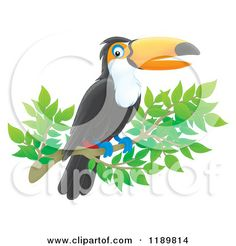 tucan outline | Cartoon of a Happy Toucan Flying in Color and Outline - Royalty Free ...