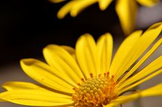 yellowflower by A.J. Dubuque on 500px