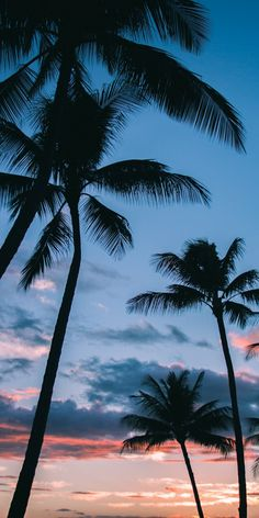 Palm Trees in Paradise iPhone X wallpaper – background iphone Paradise Wallpaper, Palm Wallpaper, Summer Wallpaper, Nature Wallpaper, Wallpaper Backgrounds, Wallpaper Makeup, Palm Tree Wallpaper Iphone X, Cute Iphone Wallpaper Tumblr, Wallpaper Fur