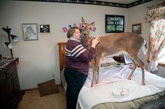 Animal memes Oh deer.