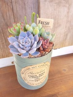 Succulents In Containers, Cacti And Succulents, Planting Succulents, Planting Flowers, Garden Terrarium, Succulent Terrarium, Flower Planters, Flower Pots, Decoupage Tins