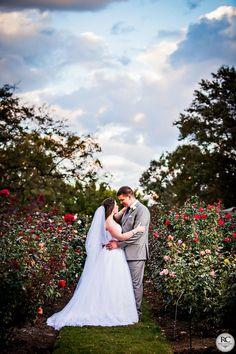 Rose Garden   Ross Costanza Photography
