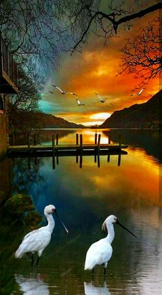 When I admire the wonders of a sunset or the beauty of the moon, my soul expands in the worship of the creator. Beautiful Photos Of Nature, Beautiful Moon, Amazing Nature, Nature Photos, Beautiful Birds, Nature Nature, Mother Nature, Amazing Art, Beautiful Pictures