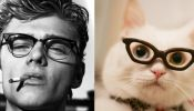 LOL: Male Models Paired With Cats That Look Like Them - DesignTAXI.com