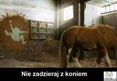 L'Etudiant: Veterinary Are you sure your career choice is the best fit? Youth's got future Funny Horse Pictures, Really Funny Pictures, Horse Photos, Funny Photos, Funny Lion, Animal Doctor, Montage Photo, Funny Slogans, Jokes