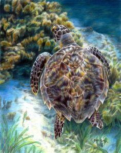 Sealife Art Swimming Turtle Original Artwork by Carla Kurt by CarlaKurtArt