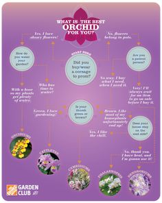 Find out what the best orchid is for you on The Home Depot Garden Club.