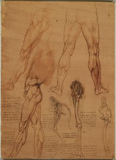 leonard de vinci - The leg muscles and bones of man and horse | The Royal Collection