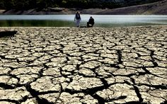 Nestle Continues Stealing World's Water During Drought   Straight from the Horse's Heart
