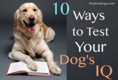 10 Ways to Test your Dog's IQ #CoolDogObedienceTips #DogObidience