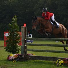 Brabant Paard