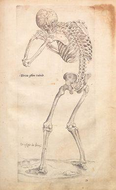 De Humanis Corporis Fabrica VI, by Andreas Vesalius. See: http://pinterest.com/pin/287386019941461763/