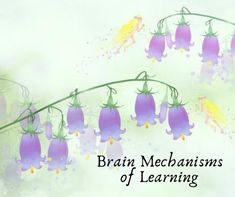 Brain Mechanisms of Learning – Poetic Mindfulness Critical Period, Neuroscience, Brain, Parenting, Mindfulness, Writing, Learning, The Brain, Studying