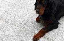 Helle Polar  #hellekolleksjon #asak @asak_miljostein Dogs, Animals, Animales, Animaux, Pet Dogs, Doggies, Animal, Dog, Animais