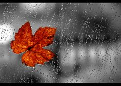 rain scenes pictures | 25 Beautiful Examples of Rain Photography | Free and Useful Online ...