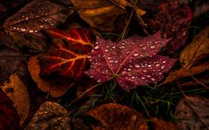 """""""An autumn forest is such a place that once entered you never look for the exit!""""  ― Mehmet Murat ildan"""