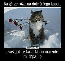 Scary Funny, Wtf Funny, Funny Cute, Hilarious, Polish Memes, Weekend Humor, Animal Jam, Funny Relatable Memes, Man Humor