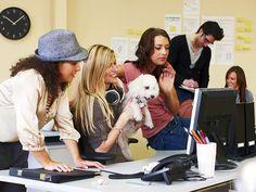 Uno de los beneficios de llevar a tu #mascota (de manera específica a perros) a los centros de #trabajo, es que se convierten en una eficaz barrera contra el estrés.  #familia #mascotas #hogar #salud #bienestar