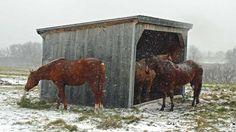 How Do I Winterize My Horse?