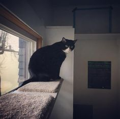 Popcorn likes to hang out on the shelf above the sink in the kitchen and supervise feeding time  Careful though. If you take too long to get her breakfast ready she might give you a light bop on the head.   _______________________>..<_____________________
