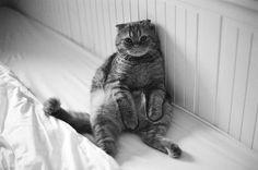 fat cat :)