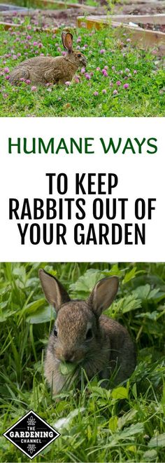Rabbit Proof Garden Fencing Rabbit Plants And Gardens