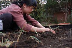 wikiHow to Save Onion Seeds -- via wikiHow.com