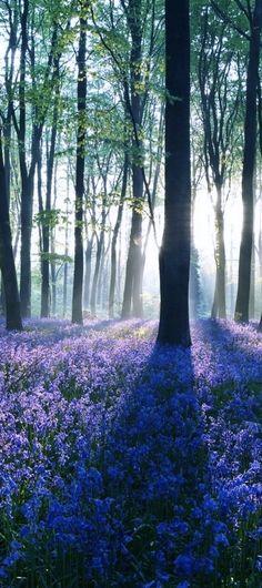Like the meadow in Twilight...