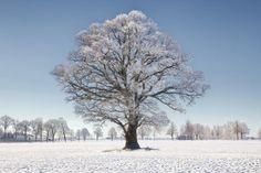Min favoritek i ännu en skepnad. #ic_nature #ice #nature #naturephotography #tolefors #östergötland #lkpg #linköping #linkoping #meralink #hejöstergötland #visitlinkoping #visitsweden #jonas_fotograf #igers #igdaily #ignature #igsweden #igscandinavia #oak #ig_sweden #ig_sverige #ig_captures #sweden_photolovers #sweden #sverige #swedishmoments #ilovesweden