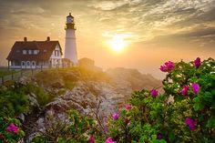"500px / Photo ""Morning Rose"" by Benjamin Williamson"