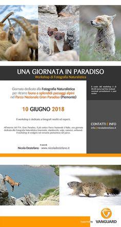 https://flic.kr/p/24TZfPS | Workshop 20 giugno 2018 | Workshop fotonaturalistico in Gran Paradiso  20 giugno 2018