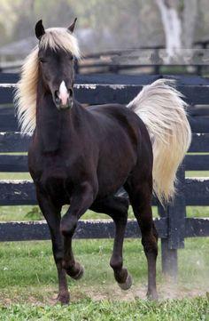 *~ Beautiful black horse. ~*