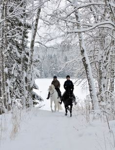 A winters ride / This pic looks just like my horses I had . Looks just like our wooded area where we would go riding.