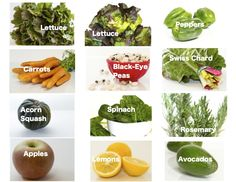 Regular Size: lettuce, peppers, carrots, dried black-eyed peas, Swiss chard, acorn squash, spinach, rosemary, apples, lemons, avocados